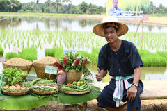 Landwirte, die Reis durch das Demonstrieren der genügenden Wirtschaft pflanzen Stockbild