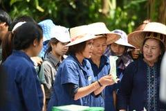 Landwirte, die Reis durch das Demonstrieren der genügenden Wirtschaft pflanzen Stockfoto