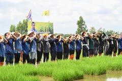 Landwirte, die Reis durch das Demonstrieren der genügenden Wirtschaft pflanzen Lizenzfreie Stockfotografie