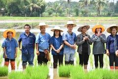 Landwirte, die Reis durch das Demonstrieren der genügenden Wirtschaft pflanzen Lizenzfreies Stockbild