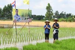 Landwirte, die Reis durch das Demonstrieren der genügenden Wirtschaft pflanzen Lizenzfreie Stockfotos