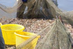 Landwirte ernten Garnelen von ihrem Teich mit einem Fischereine Lizenzfreie Stockfotografie