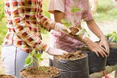 Landwirte erweitern Veggies und Fruchtanlage Lizenzfreie Stockfotografie