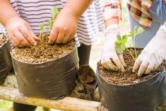 Landwirte erweitern Veggies und Fruchtanlage Stockfotos