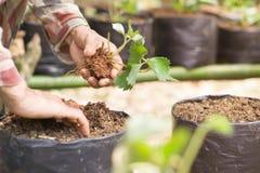 Landwirte erweitern Veggies und Fruchtanlage Stockbilder