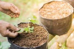 Landwirte erweitern Veggies und Fruchtanlage Stockbild