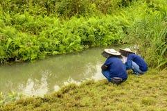 Landwirte am Feuchtgebiet Lizenzfreies Stockfoto