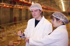 Landwirte im Huhn-Bauernhof Lizenzfreies Stockbild