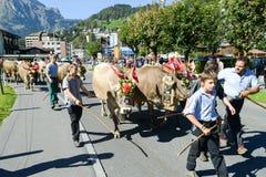 Landwirte mit einer Herde von Kühen auf dem jährlichen Transhumance bei Engelb Lizenzfreie Stockbilder