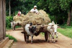 Landwirte mit ihrem Wagen auf Myanmar stockfotos