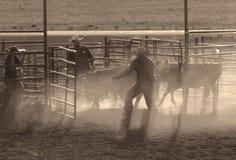 Landwirte mit Vieh Stockbild