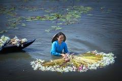 Landwirte säubern Lilien nach Ernte unter Sümpfe in der Flutjahreszeit Stockfoto