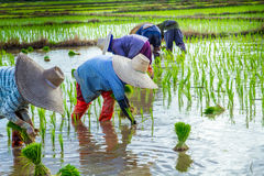 Landwirte sind zurück Knochen des Landes Stockbilder