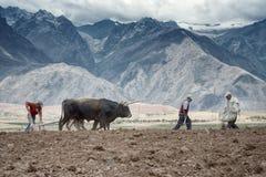 Landwirte verbreiteten manuell Düngemittel und das Pflügen des Landes Stockfotografie