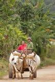 Landwirte in Vinales Lizenzfreie Stockbilder