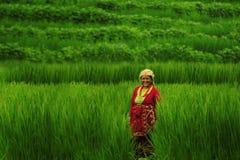 Landwirtfunktion Stockbilder