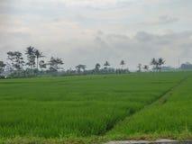Landwirtgartendorf in Indonesien Stockbilder