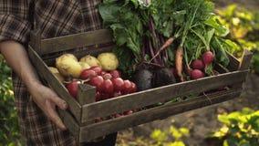 Landwirthände, die voll Holzkiste frisches organisches Gemüse, Kartoffel, Karotten, Tomate, rote Rüben, Rettich halten stock footage