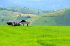 Landwirthütte, die auf grünem Reisfeld bleibt Stockfotografie