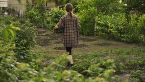Landwirtholdingholzkiste voll frisches organisches Gemüse geht entlang die Gartenbetten auf eco Bauernhof im Sonnenunterganglicht stock video