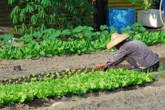 Landwirtlandwirtschaft stockfotos