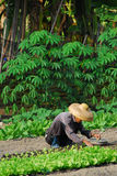 Landwirtlandwirtschaft stockbild