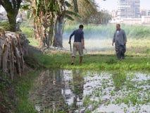 Landwirtmänner in der traditionellen Abnutzung ernten Samen, Landleben Stockfoto