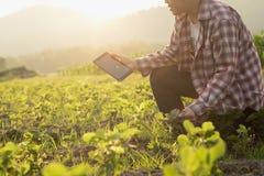 Landwirtmann gelesen oder Analyse ein Bericht im Tablet-Computer Lizenzfreies Stockbild