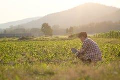 Landwirtmann gelesen oder Analyse ein Bericht im Tablet-Computer Lizenzfreie Stockfotos