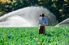 Landwirtmannagronomensonnenarbeitskraftkontrolldigitales Tablet-Computer-Plantagentechnologiehut-Sprinkleranlagewasser stockbilder
