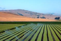 Landwirtschaft Lizenzfreies Stockfoto