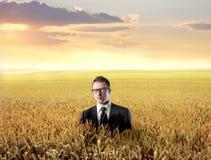 Landwirtschaft Lizenzfreie Stockbilder