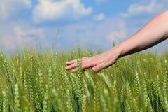 Landwirtschaft stockbilder