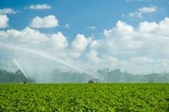 Wässernplantage Lizenzfreies Stockfoto