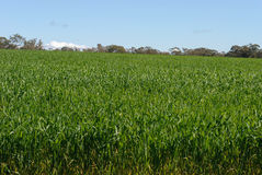 landwirtschaft Lizenzfreies Stockbild