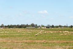 landwirtschaft Stockfotos