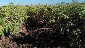 landwirtschaft Lizenzfreie Stockfotografie