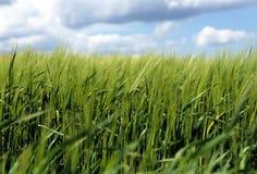 Landwirtschaft. Lizenzfreie Stockfotografie