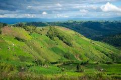 Landwirtschaft auf Berg Stockbild