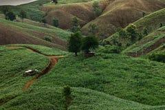 Landwirtschaft auf Berg Lizenzfreie Stockfotografie