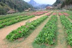 Landwirtschaft auf den Bergen. lizenzfreie stockfotografie