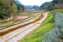 Landwirtschaft auf den Bergen. lizenzfreie stockfotos