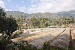 Landwirtschaft auf den Bergen. stockbild