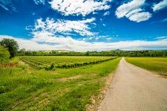 Landwirtschaft auf den Hügeln von Toskana und von Romagna Apennines lizenzfreie stockfotos
