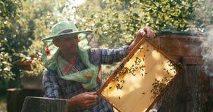 Landwirtschaft comcept Alter Apiarist im Hutschleier hält die Bienenwabe auf dem Holzrahmen vor dem Bienenraucher stock footage