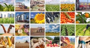 Landwirtschaft in der Collage stockfotografie