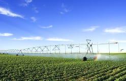 Landwirtschaft des Hilfsmittels Stockfotos