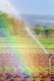 Landwirtschaft des Kopfsalates in einem Regenbogen Stockfotografie