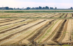 Landwirtschaft entlang dem adriatischen Meer, Italien Stockfoto