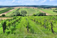Landwirtschaft in Europa Stockbilder